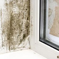antimuffa per pareti sanificanti