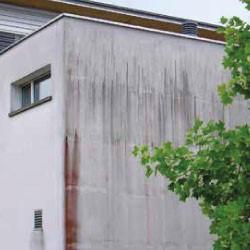 Rimozione alghe e funghi per muri