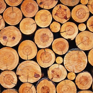legno catalogo